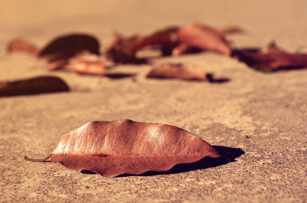 fallen_leaves_hires